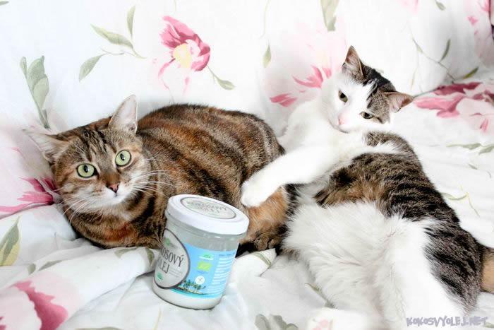 panenský kokosový olej pre mačky a psov